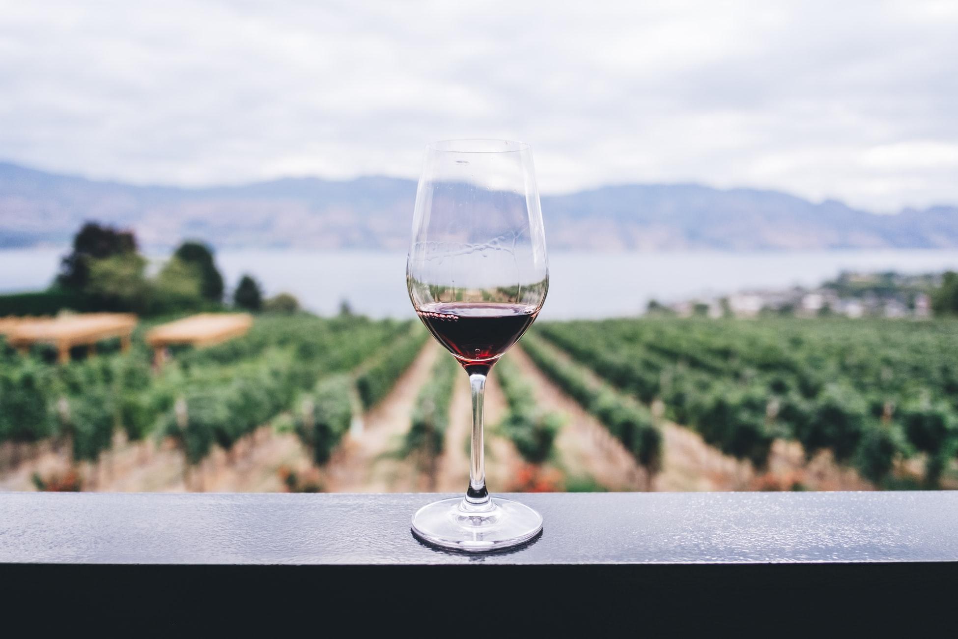 verre de vin sur vignes
